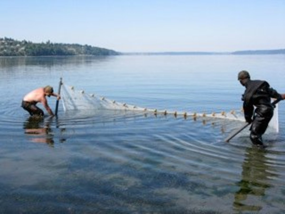 Beach seining hubpages for Seine net fishing