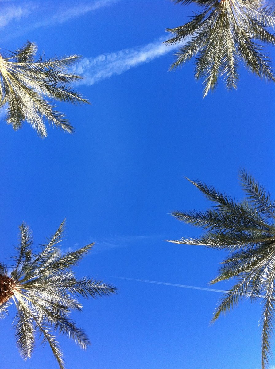 This is one of my favorite views, from a Hammock! Oh My!