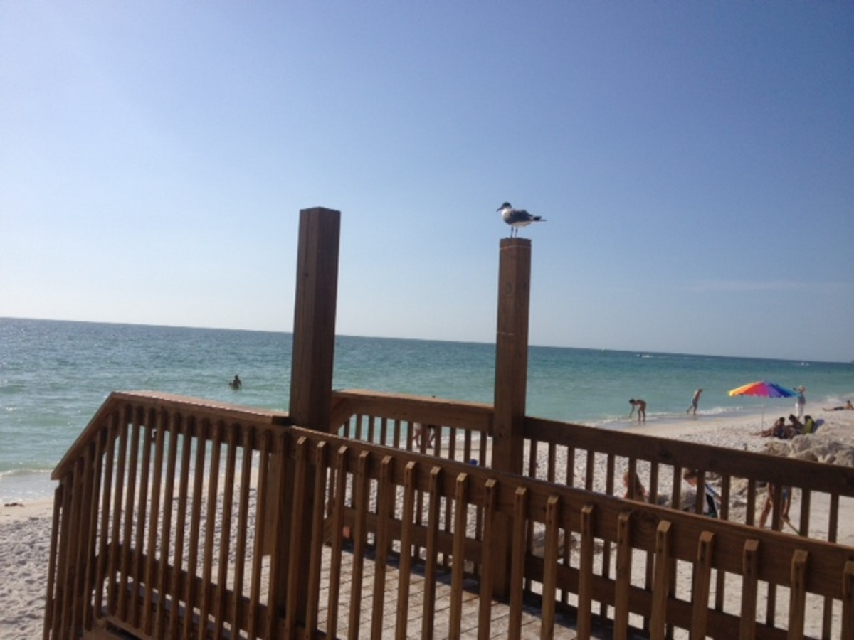 Beaches, Seagulls, and Blue Skies!