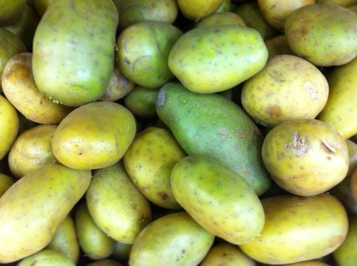 Fresh or Green Potatoes