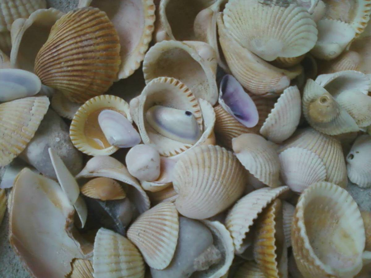 Shells found on Dauphin Island