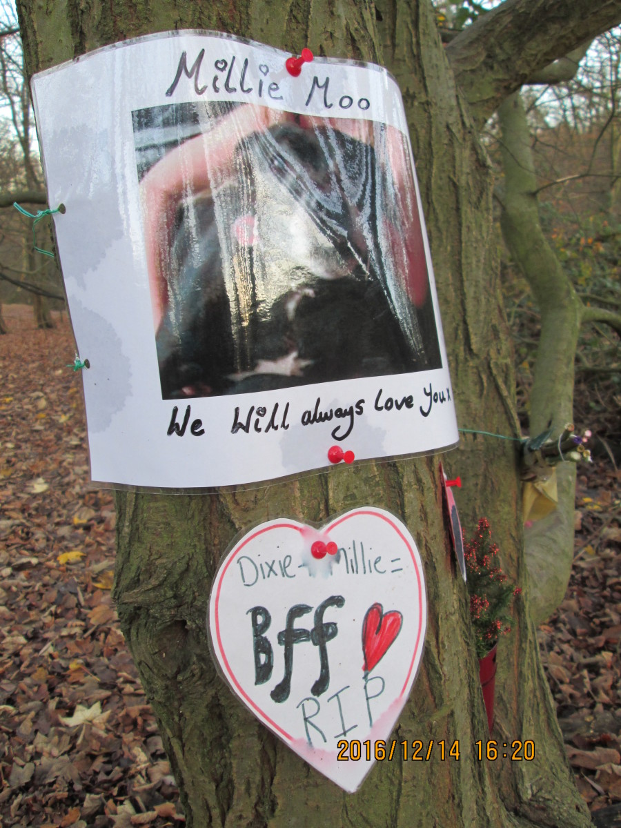 Touching tribute to the family pet attached to a tree - glossy paper caught the light, but the animal was a 'Staffy' (Staffordshire terrier).