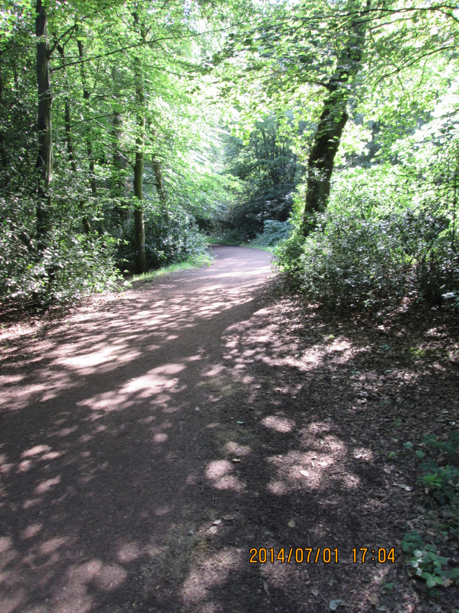 Nice bit of dappling on the path for you, between the last pond and...