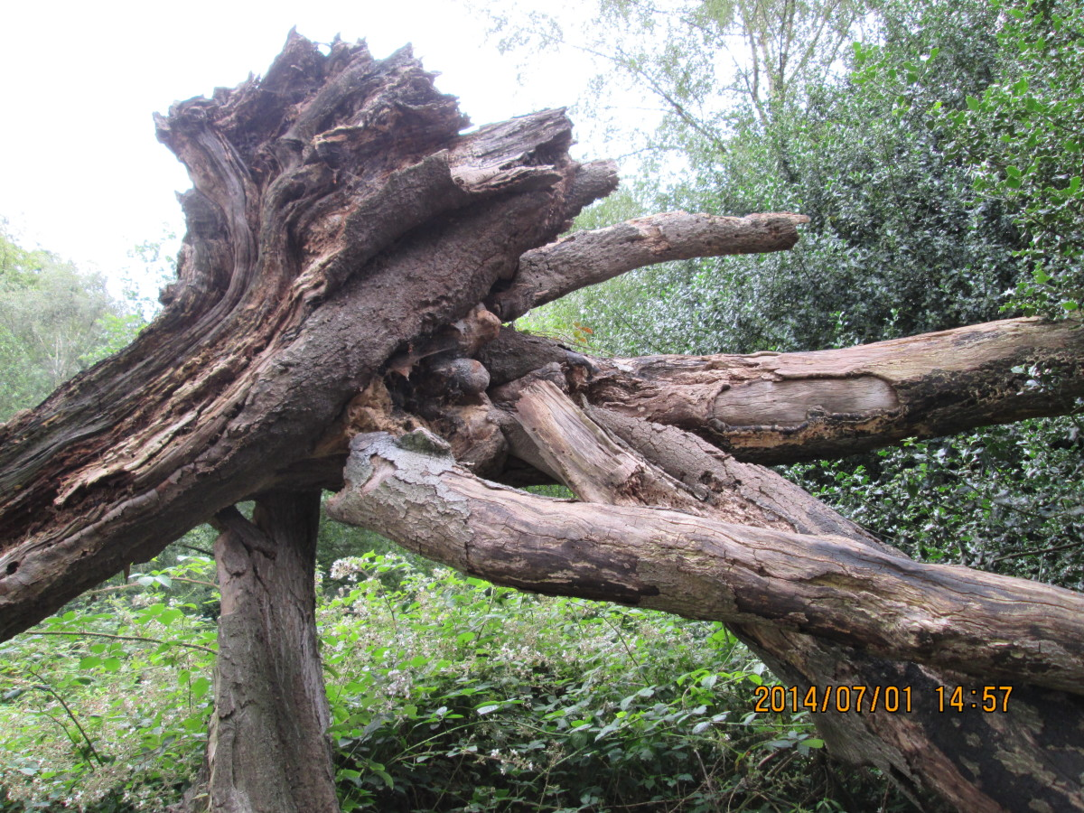 Nice piece of Mother Nature's sculpture (a bit Henry Moore-ish if you ask me)