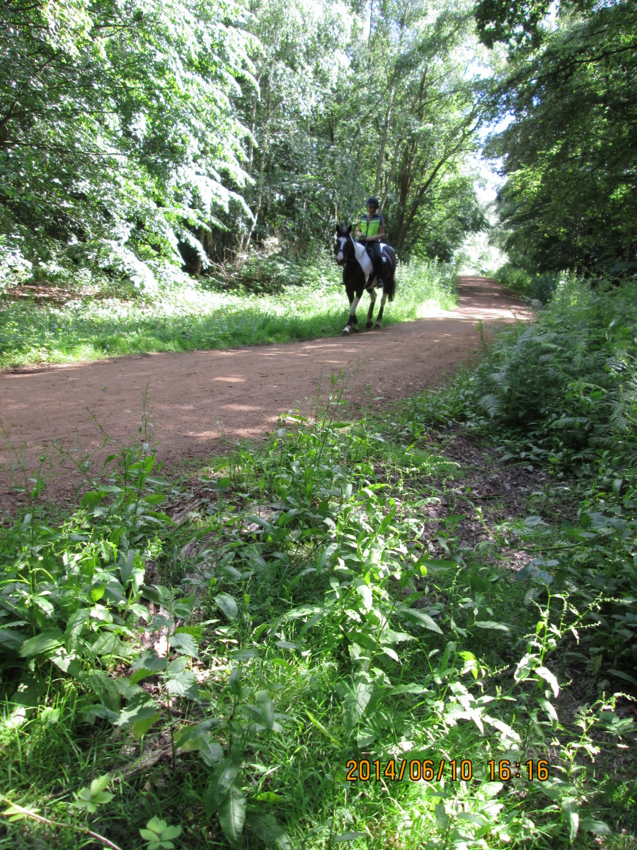 Just to oblige, here's a rider on her way to High Beech or back to the stable. There are several riding schools and stables in the district