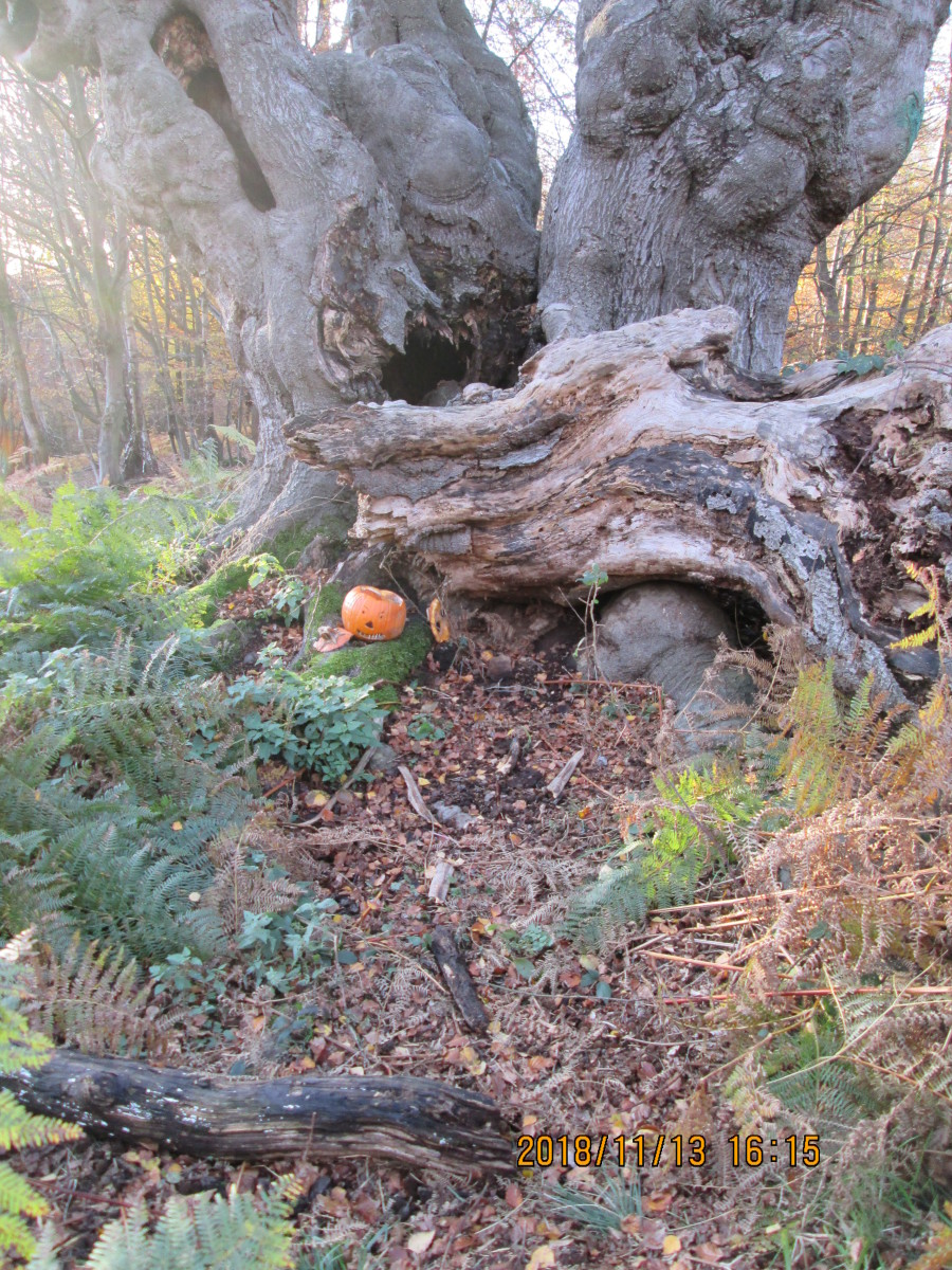 """""""Haaalowe'en is not that far back in time, and after a short cold snap the trees have shed their leaves... And someone's left a memento of their celebrations. Some parts of the forest are spooky at the best of times!"""