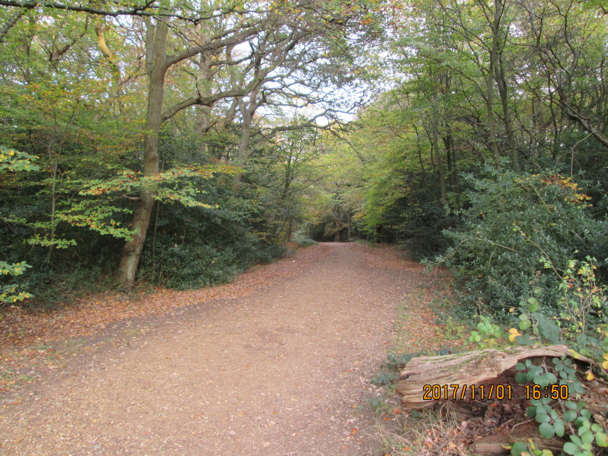 Across the other side of the Earl's Path, the road that leads from Robin Hood Roundabout to Loughton a track leads around the back of the town