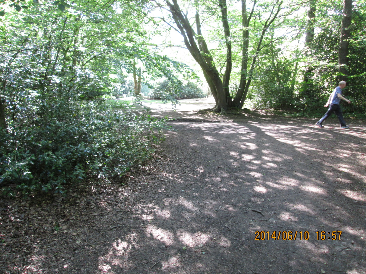After crossing the road a bridle/footpath passes a couple of meres or small lakes. This is looking back to the bridle path from the path down through the wood to a small common