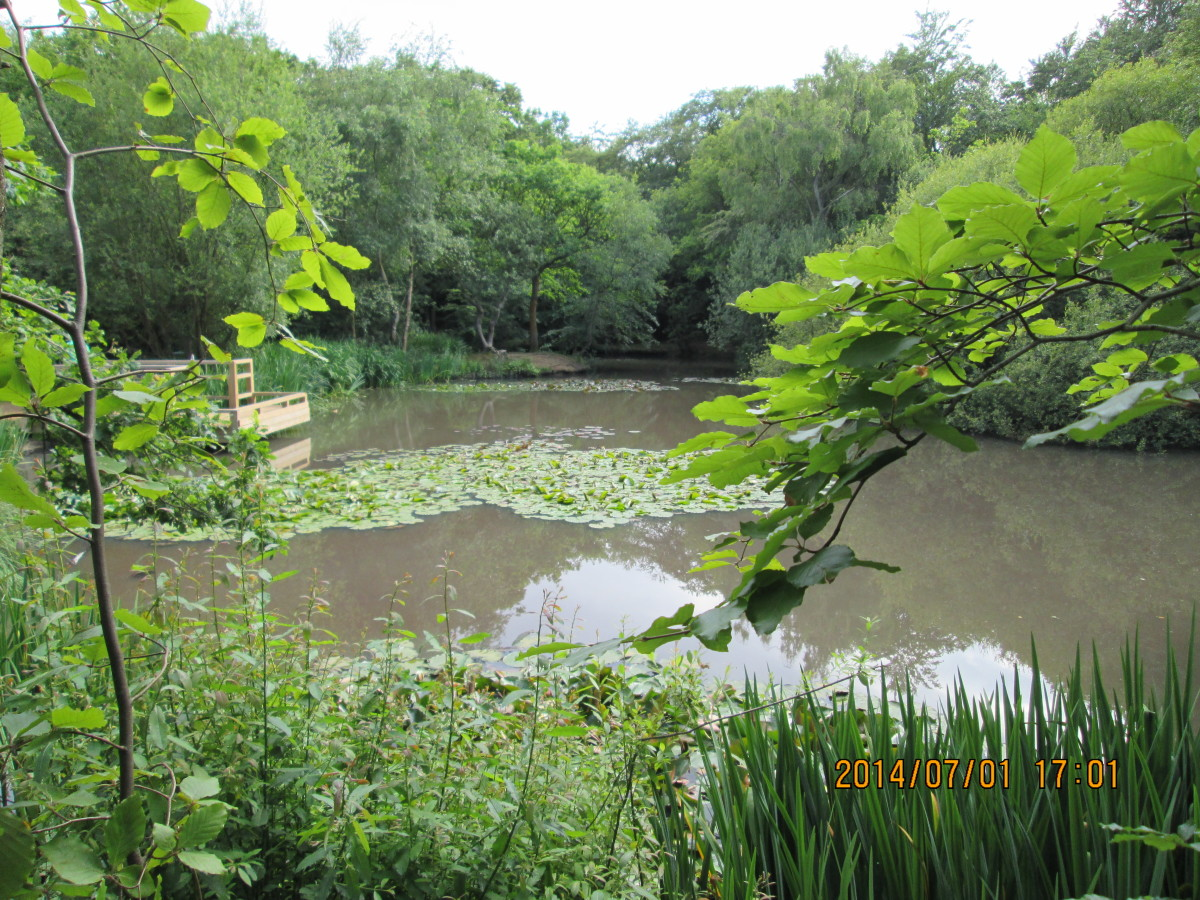 This pond, situated beside the road named 'The earls path', is called the Earls Path Pond. Fair enough. Can't argue with that.