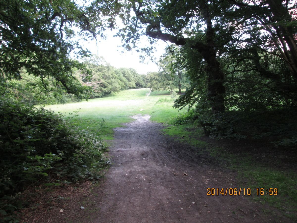 Looking out from the wood to the open common. The footpath leads over the low ridge...