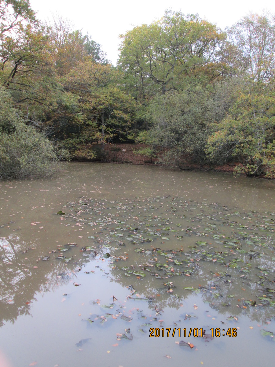 The mere seen from the pier (he's a poet and knows it!) in an autumnal setting with dead leaves floating on the surface