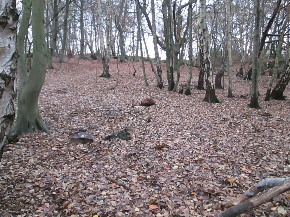 HERITAGE - 15: A Walk In The Woods, Epping Forest Trail via High Beech