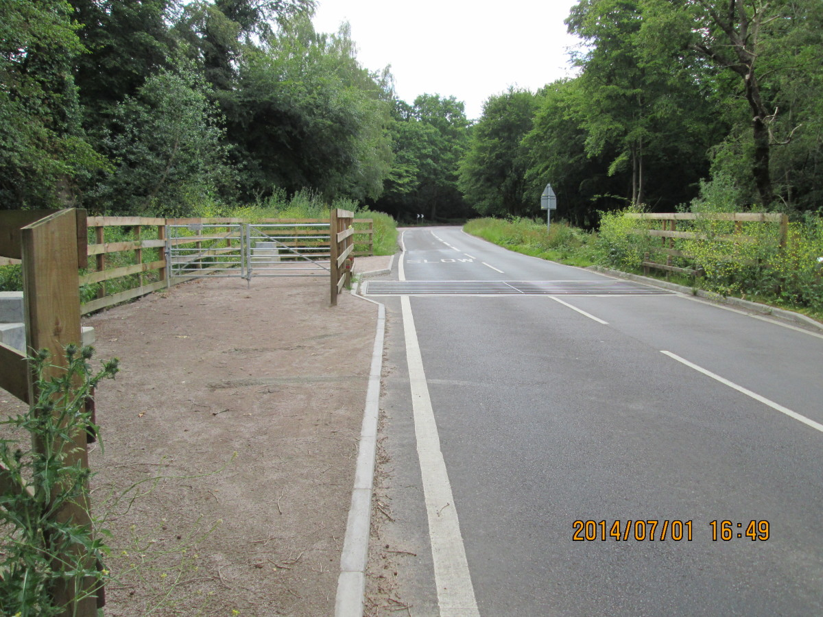 On the way out from High Beech to the Robin Hood roundabout, the cattle grid - at some time the forest herd will be allowed to roam free, some longhorns, some Highland cattle