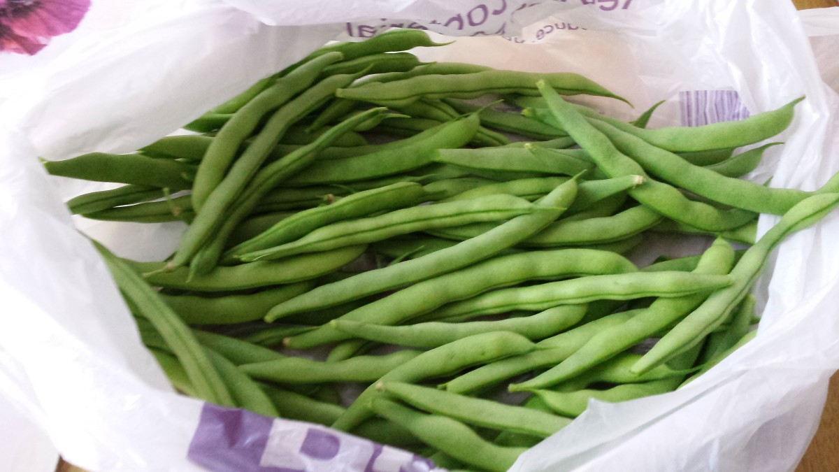 These are my own home grown beans, no pesticides, pure organic