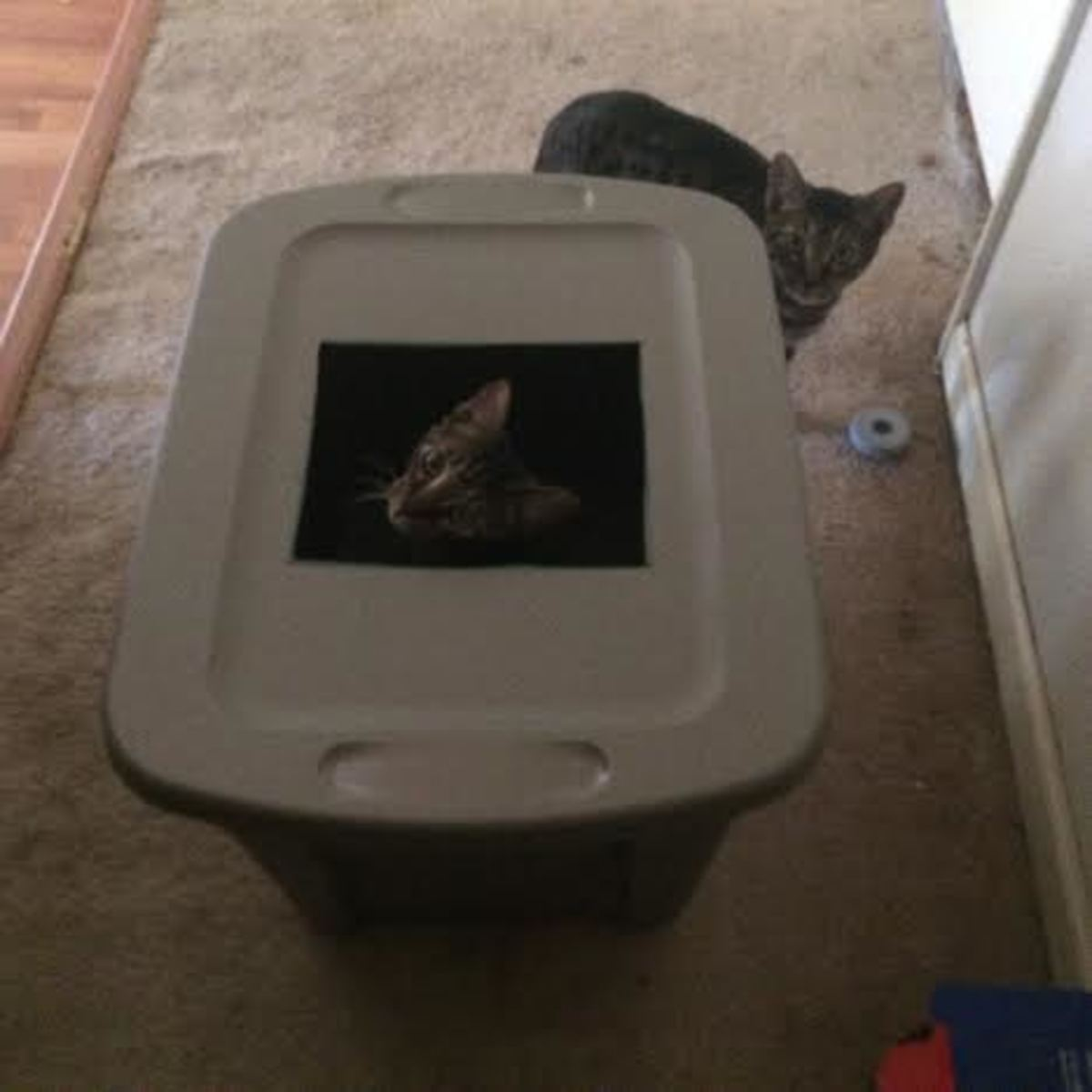 Why pay for an expensive top-entry litter box when you can build one for cheap?