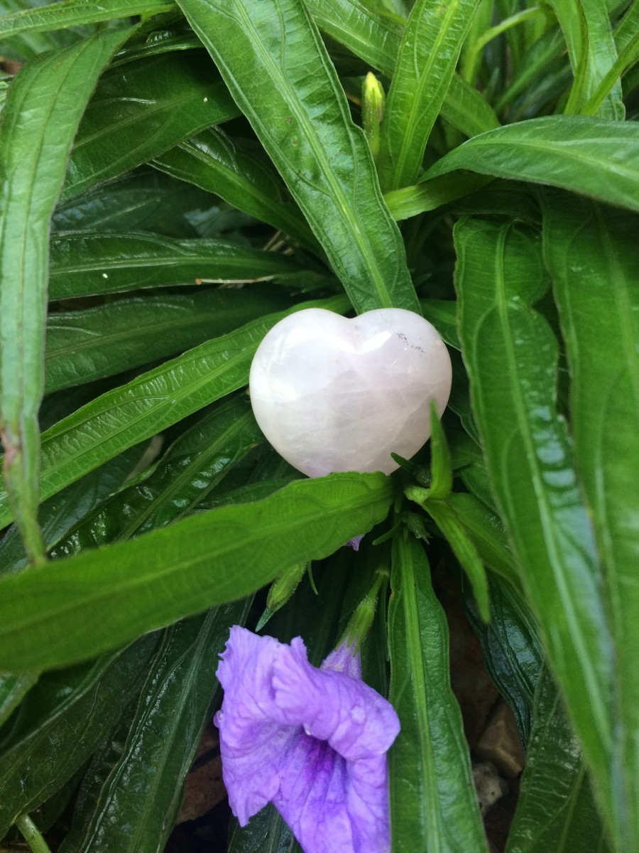 Heart shaped Rose Quartz in flower bush