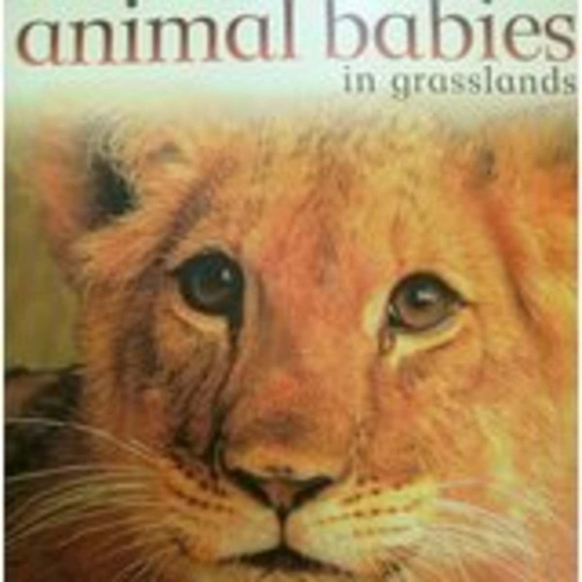 Animal Babies in Grasslands by Jennifer Schofield