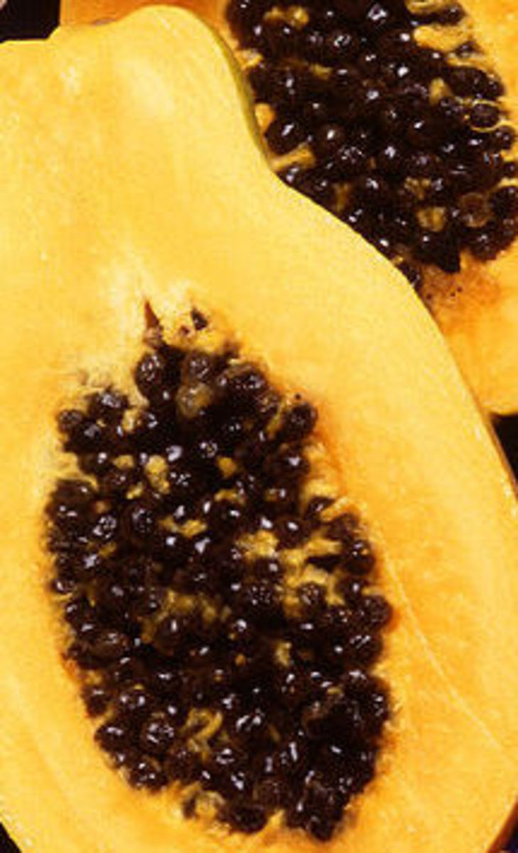 Food from the tropical rain forest: papaya