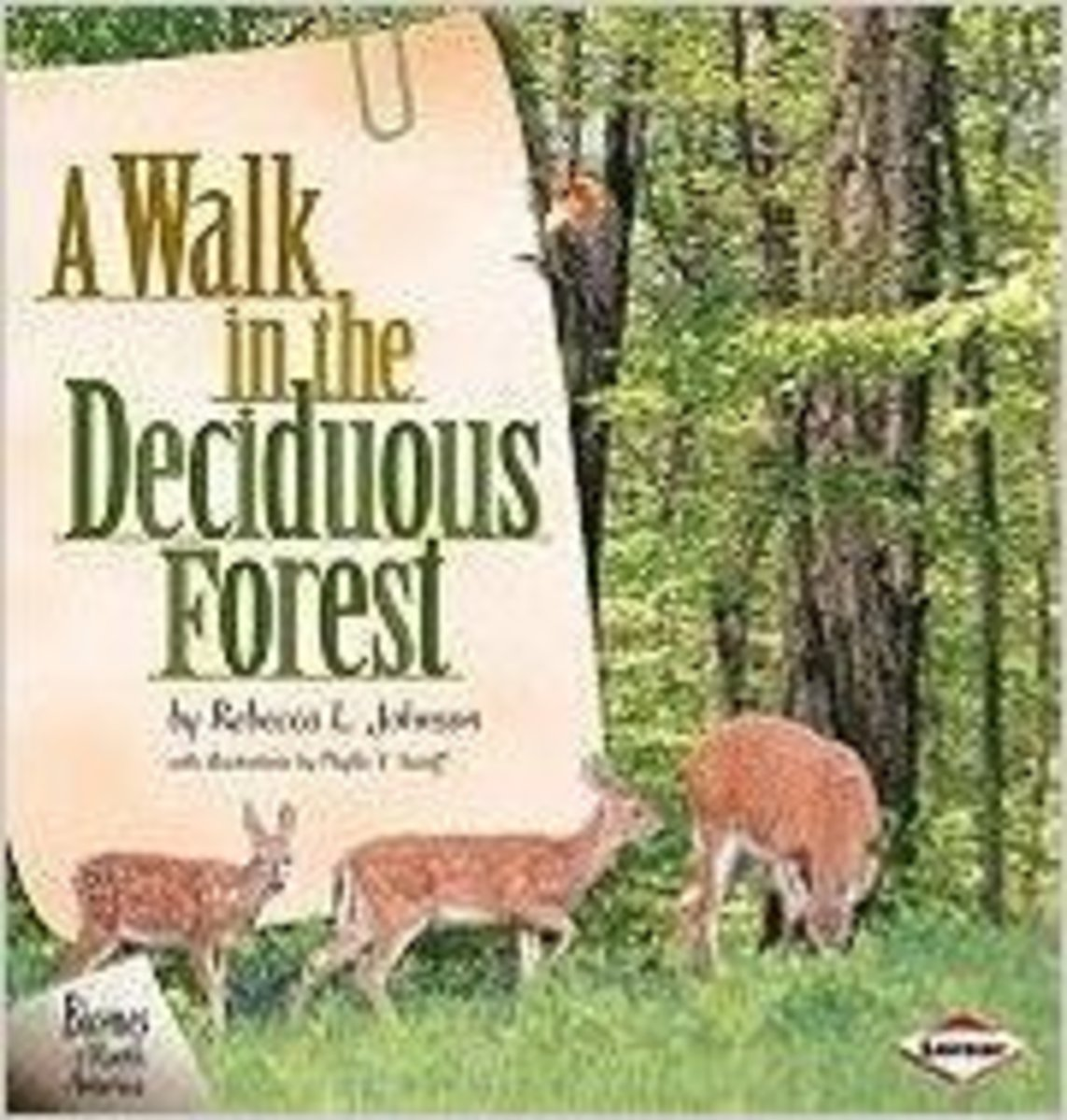 A Walk in the Deciduous Forest by Rebecca L. Johnson has nice photographs of deciduous forests -- and just enough text to keep children's interest if you have extra time and would like to read it.