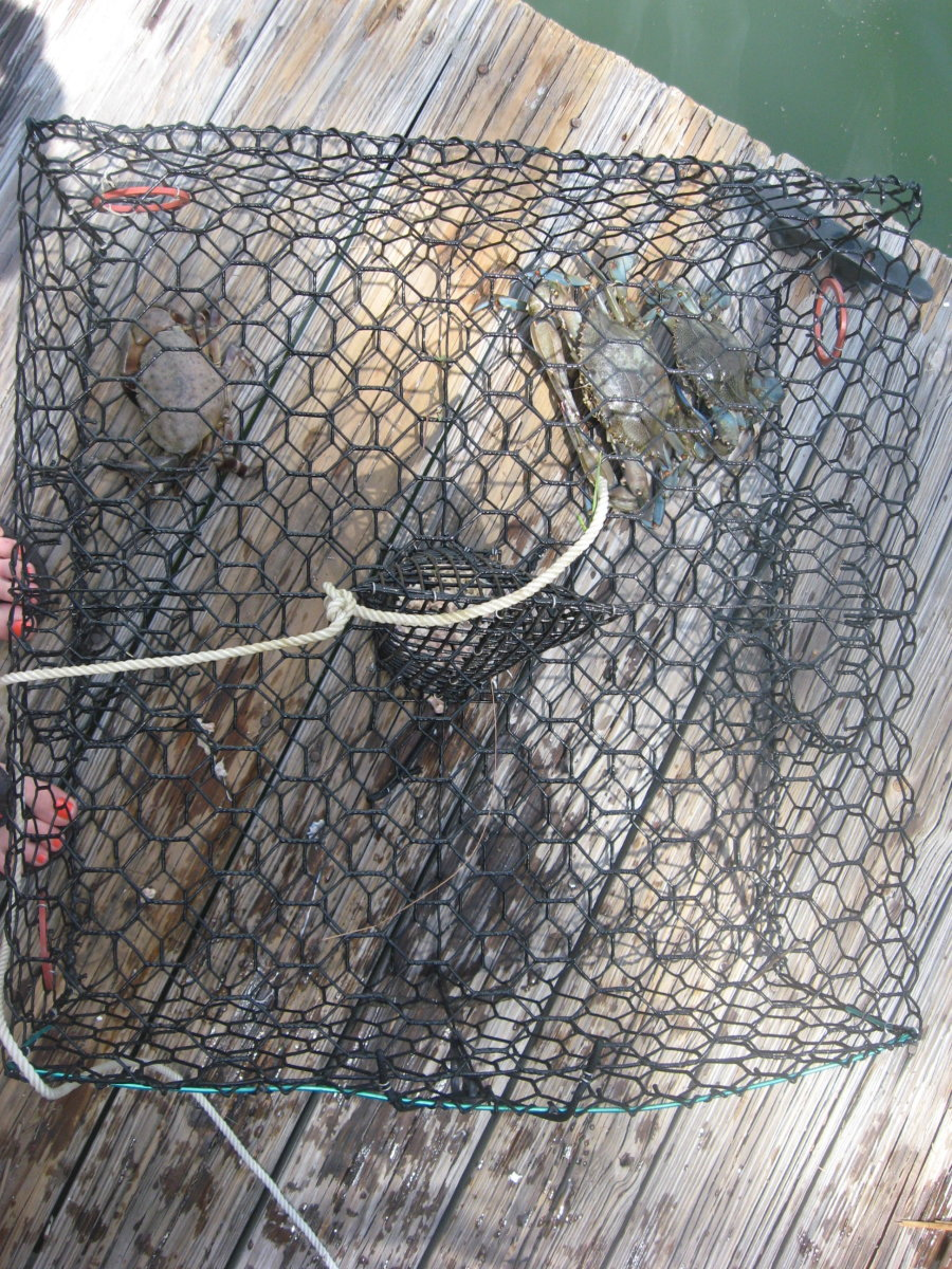 Do your own crabbing!
