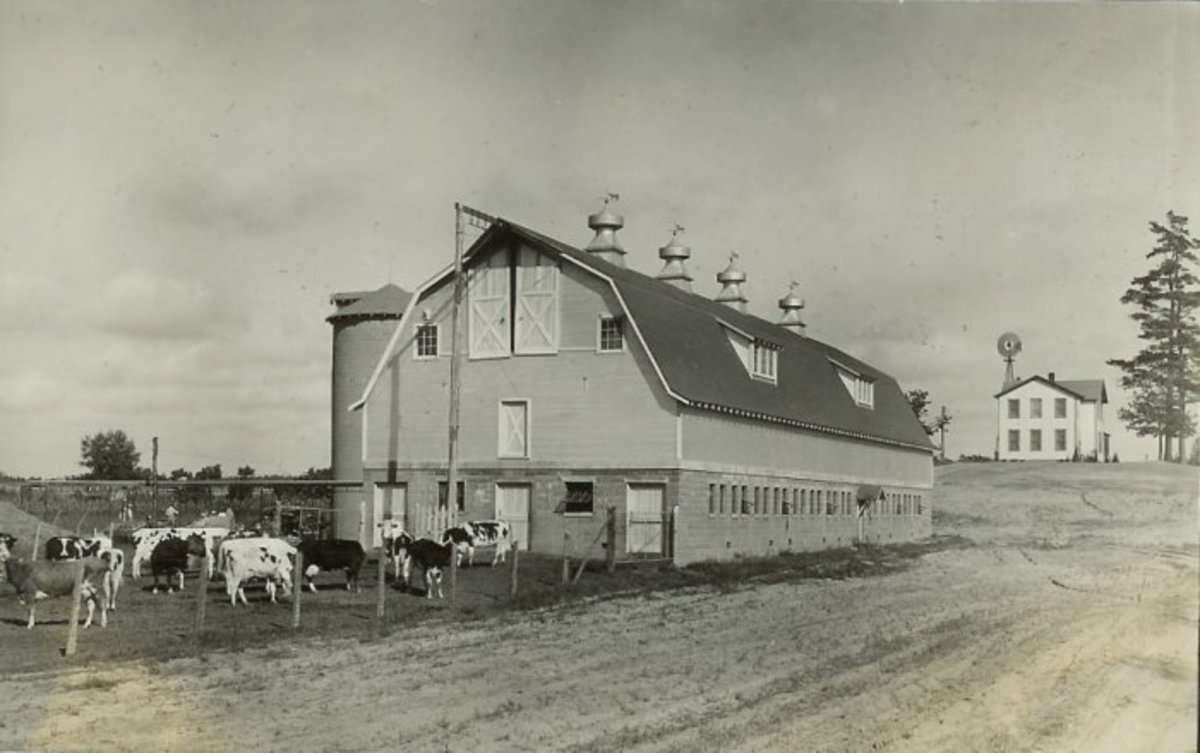 HOUSE OF DAVID DAIRY FARM