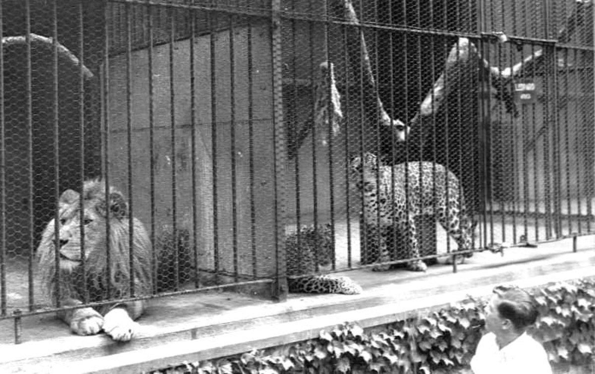 HOUSE OF DAVID ZOO HAD LIONS AND CHEETAHS!
