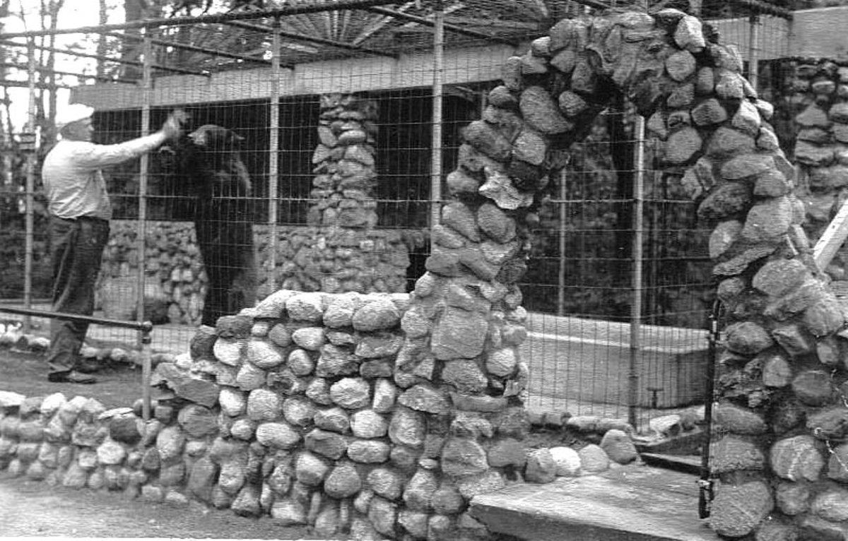HOUSE OF DAVID BEARS