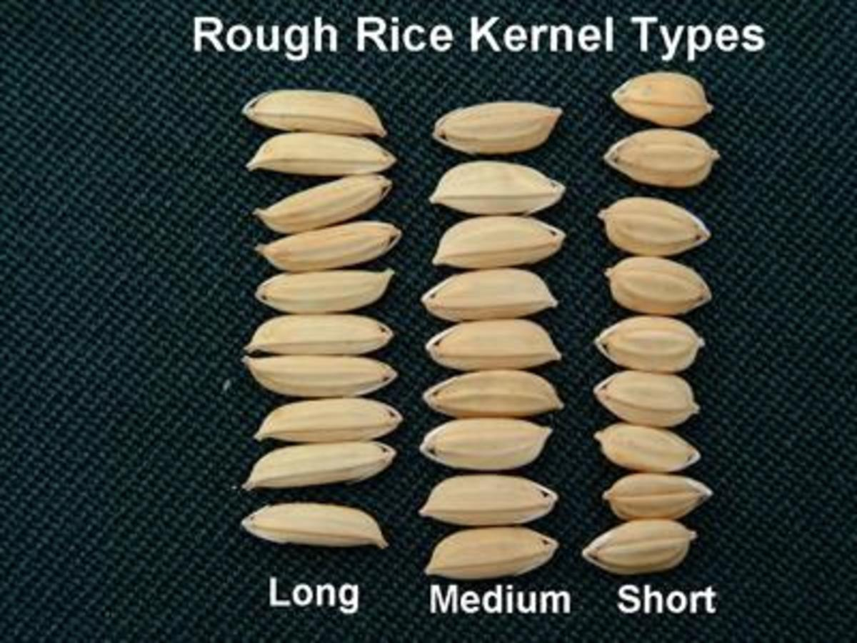 3 Classifications for Rice Length: Long, Medium and Short Grain