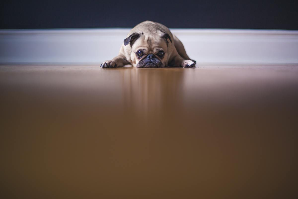 10 Signs Your Dog Misses You When You're Gone