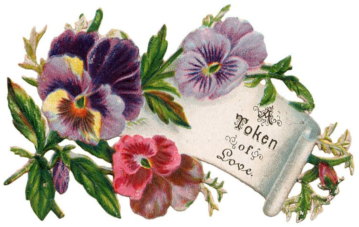 "Vintage Mother's Day card: Pansies with scroll note ""A token of love"""