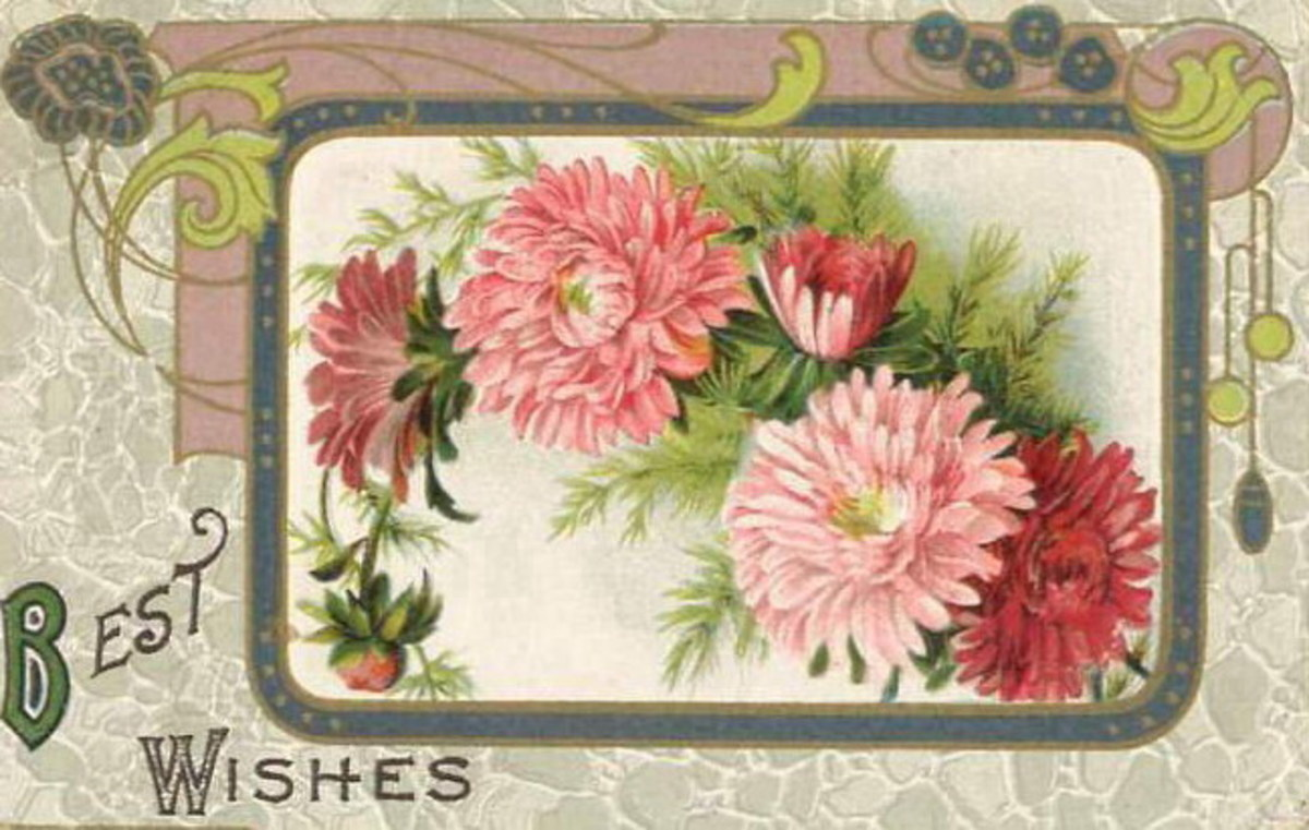 "Pink chrysanthemums ""Best Wishes"""