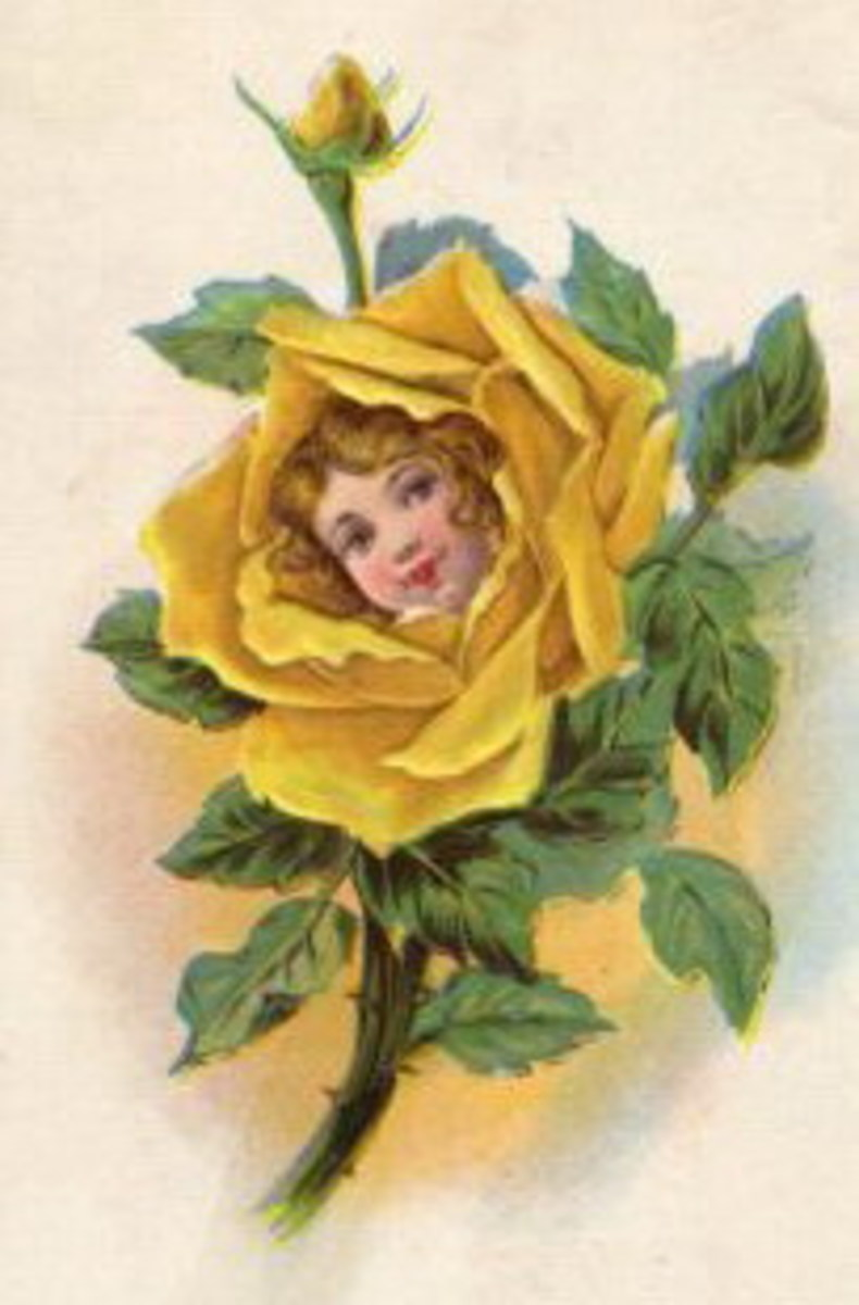 Yellow rose with little girls head