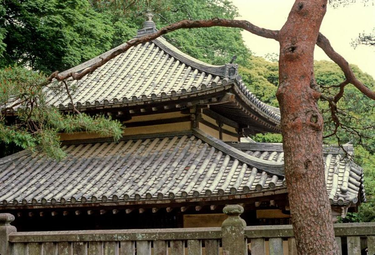 The beautiful tile roofs and pine trees of Japan
