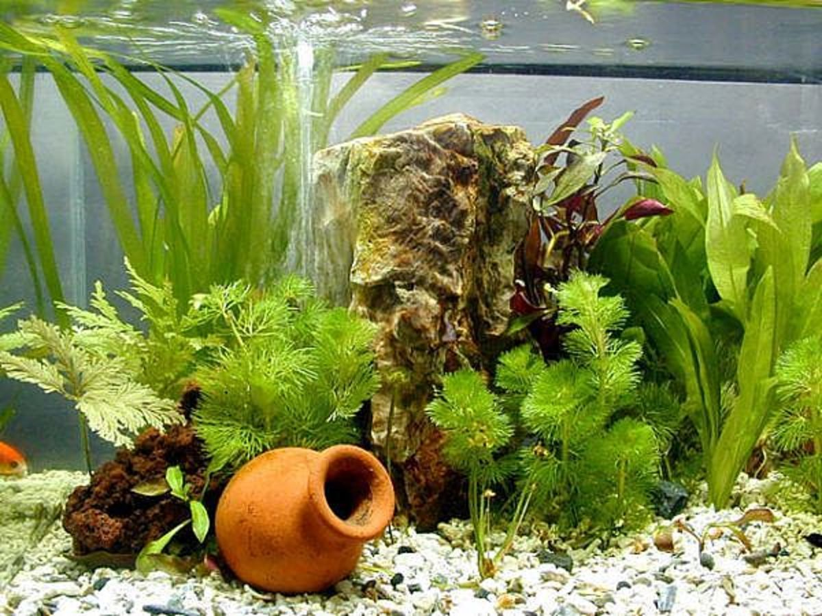 Step by step on how to make a planted aquarium at home