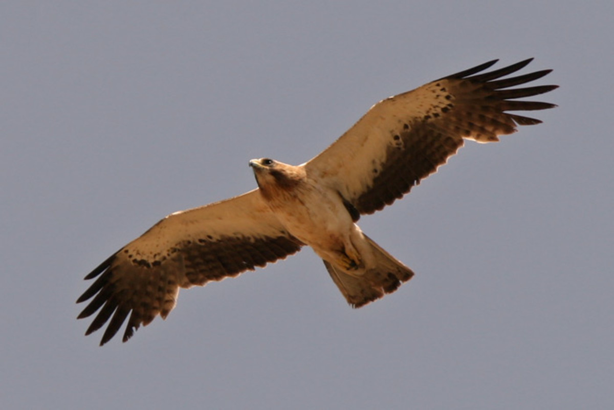 borderlands-a-radical-birdwatcher-in-dobruja