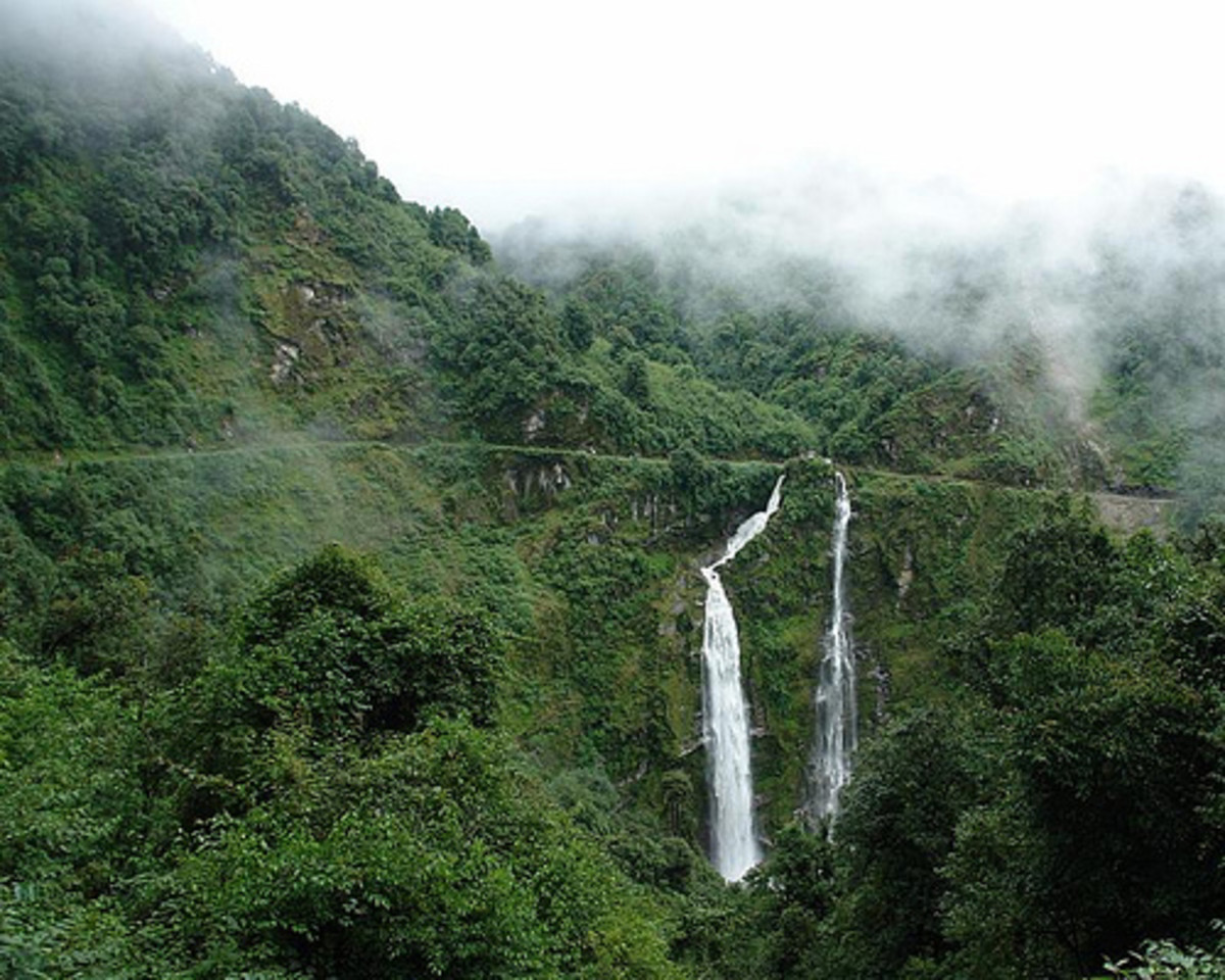 Different Types Of Himalayan Forests And Variety Of Mammal ...