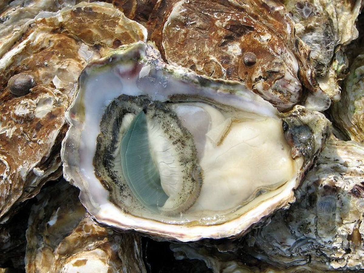 avoid impotence with foods like Oysters that increase the production of Testosterone