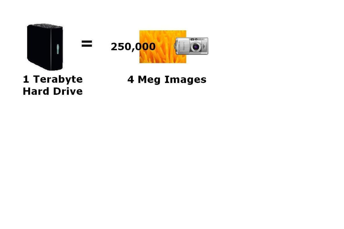 A one terabyte storage device can hold up to 250,000 images that are 4 megs in size each.