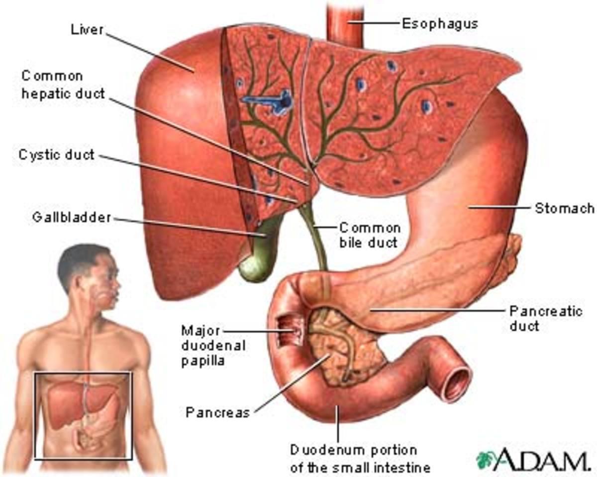 A diagram of the gall bladder region