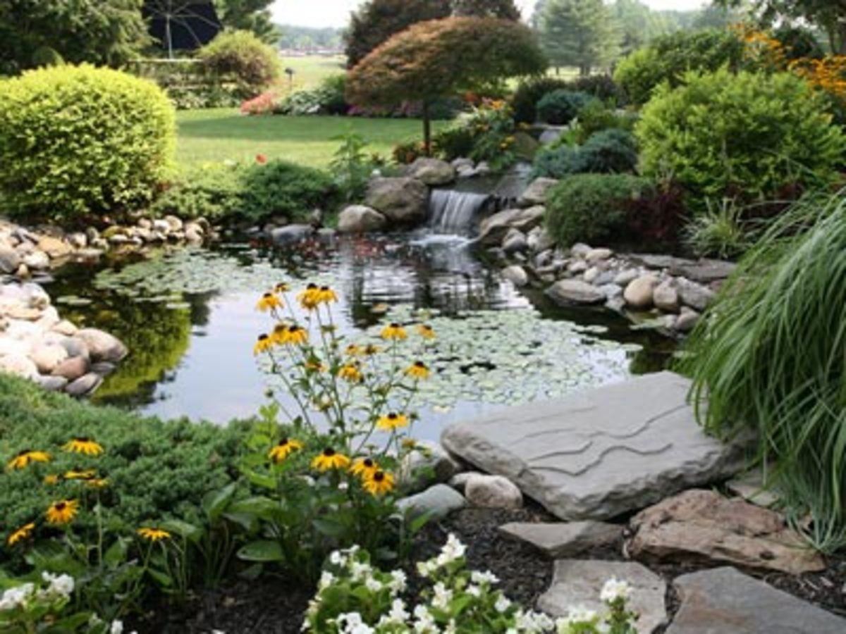 Tropical fish and koi hubpages for Fish pond preparation