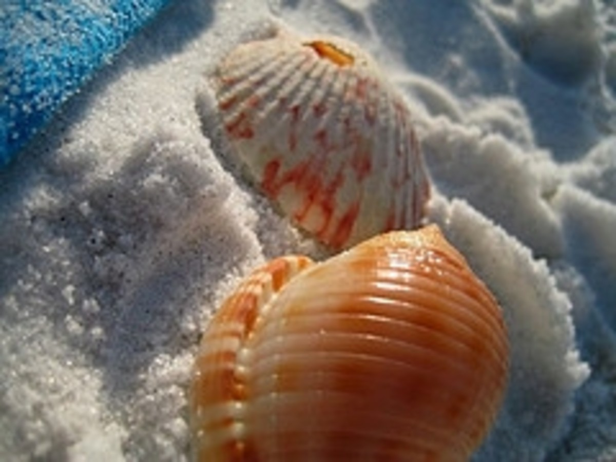 Seashell Pictures