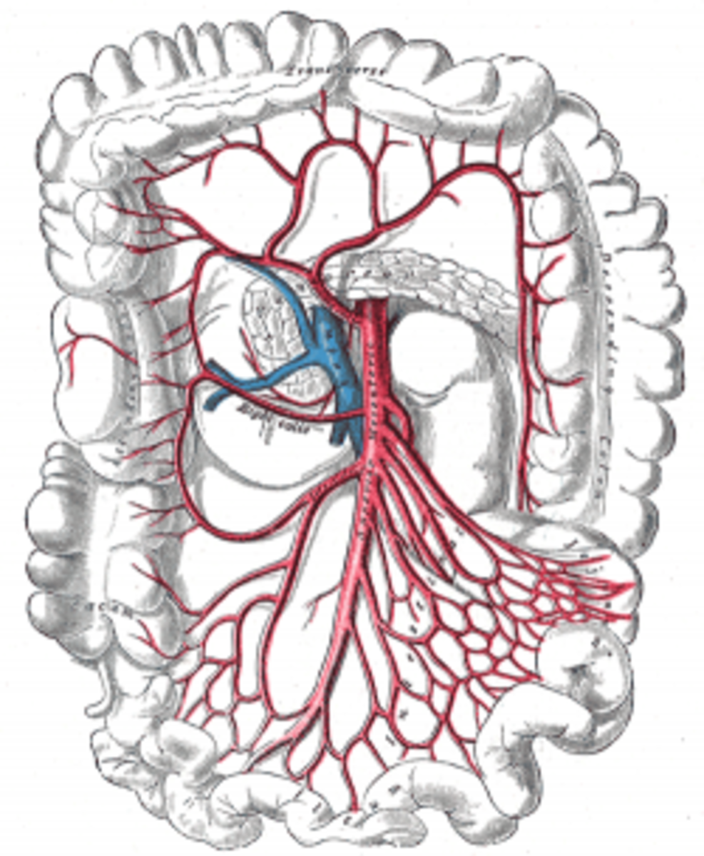 human-anatomy-lesson-10