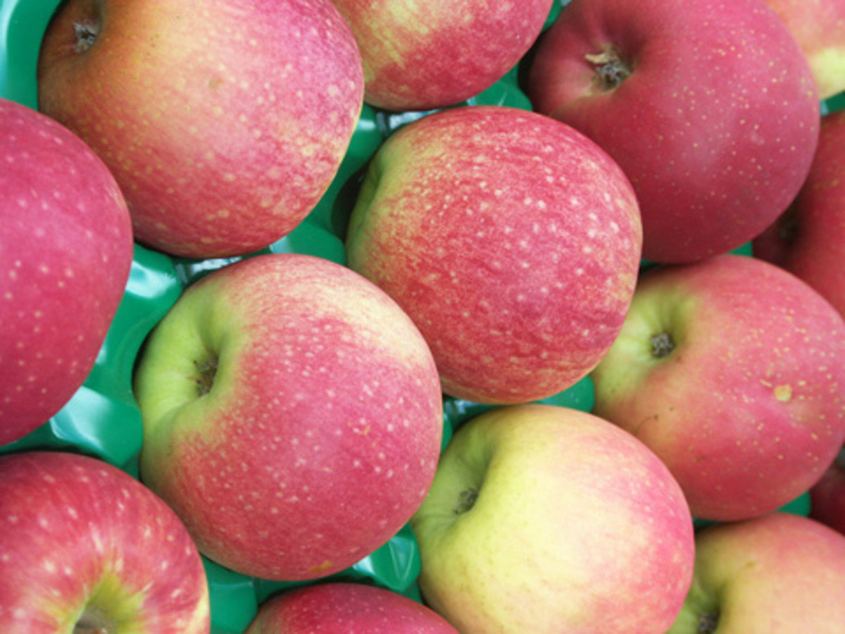 Rare pink lady apples