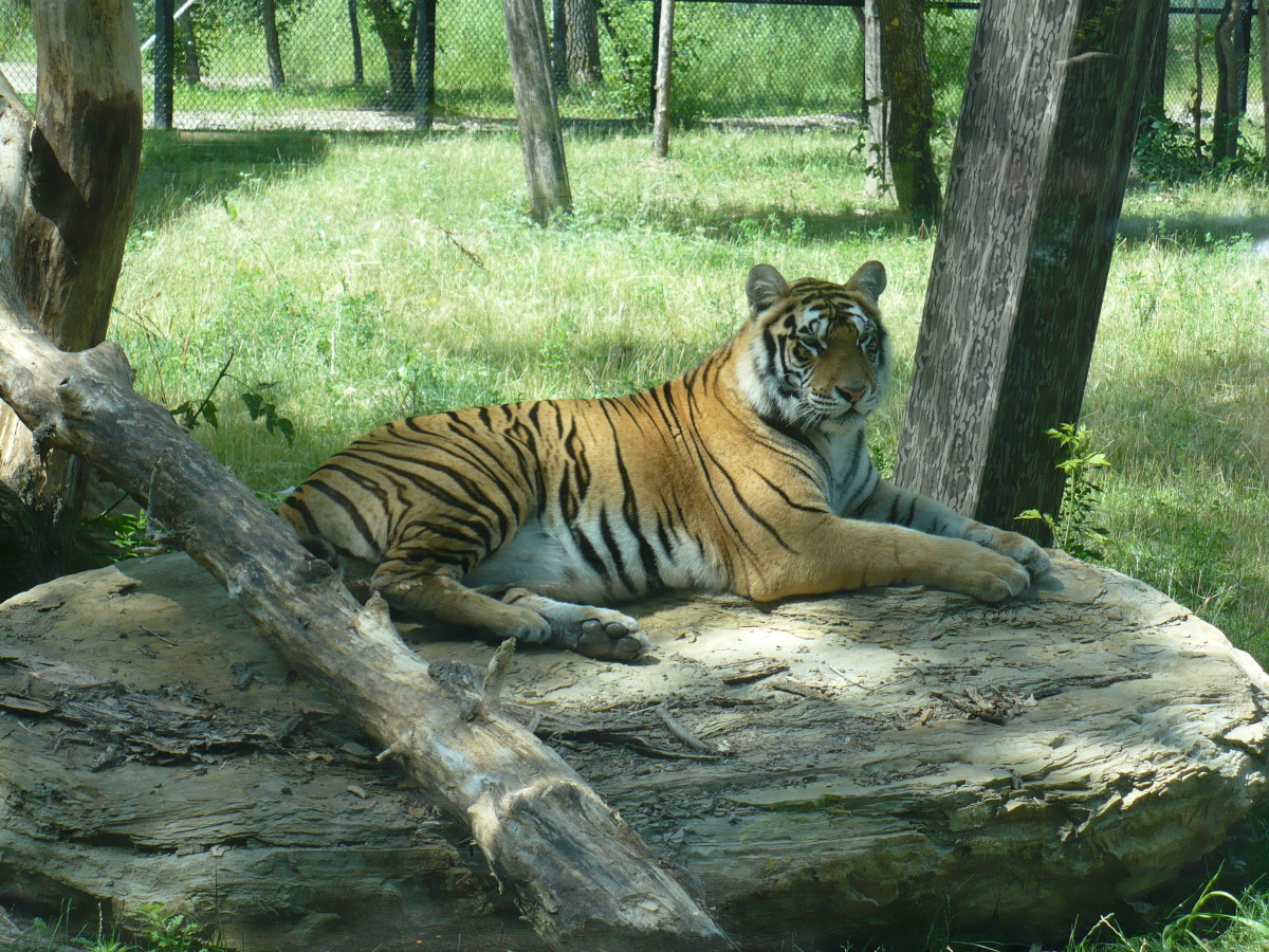 The Big Cat Habitat is one of the most recent expansions