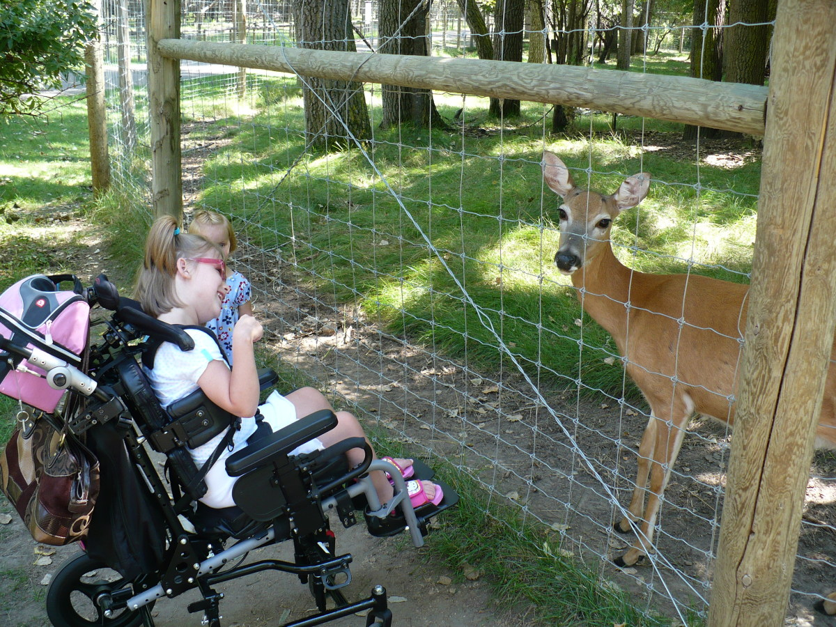 The deer are so used to people, they'll come up to you and eat corn out of your hand