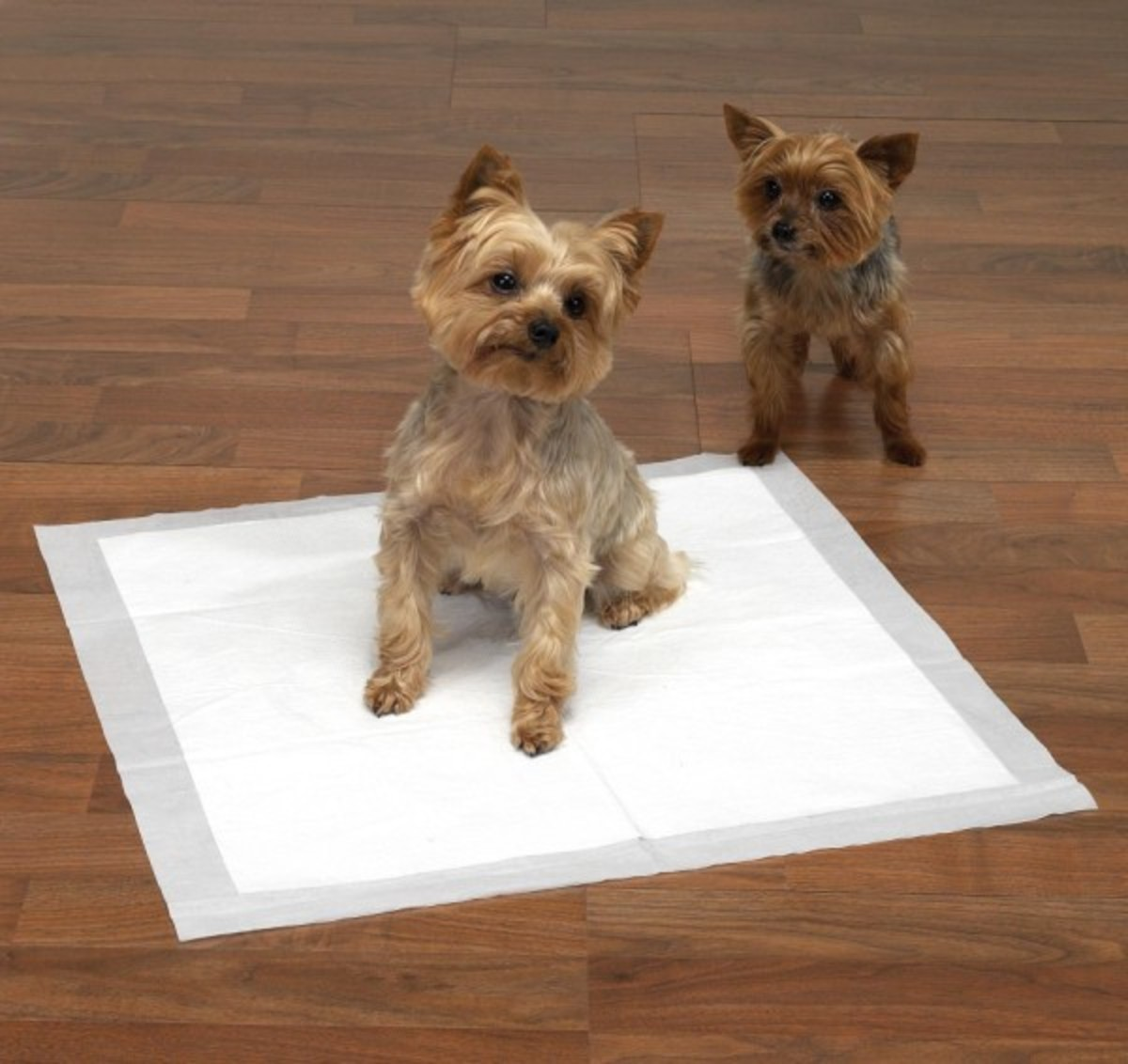 how-to-potty-train-a-puppy-completely