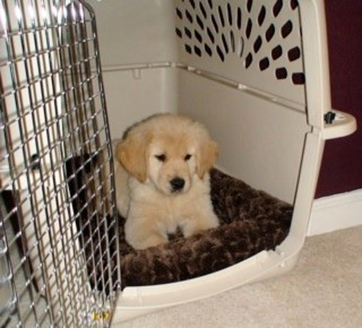 how to get a puppy potty trained
