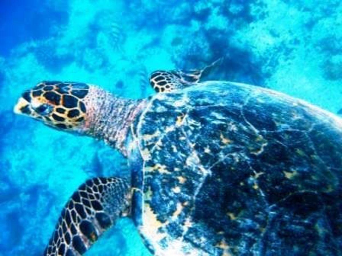 diving-bahamas