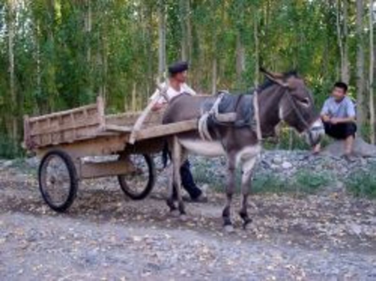 The Donkey Cart (Synopsis)
