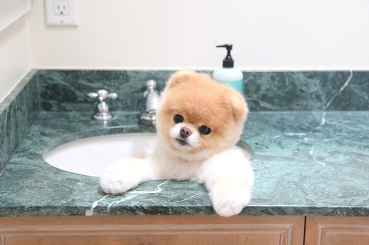A bath for Boo in the sink.